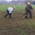 Striscia la Notizia: cane picchiato durante addestramento (VIDEO CHOC)