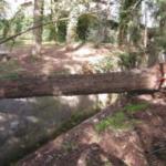 Seneghe: allevatore schiacciato da un albero, morto per scarsa prudenza