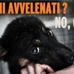 Avvelenamento cani, aumentano i casi in Italia