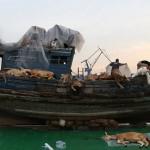 La nuova Arca di Noè per dire no all'inquinamento (FOTO)