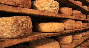 allarme formaggio contaminato da muffa e ammoniaca