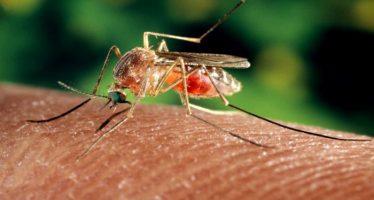 quattro casi di malaria a taranto