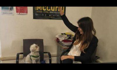 in ufficio con il cane a genova