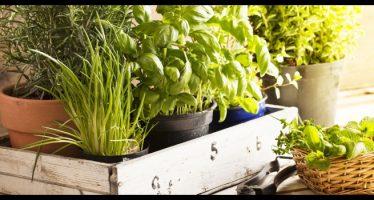 come conservare erbe aromatiche