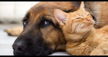 come eliminare i peli di cani e gatti