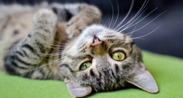 come rinfrescare il nostro gatto in estate