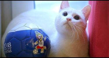 achille, il gatto delle profezie sui mondiali russia 2018