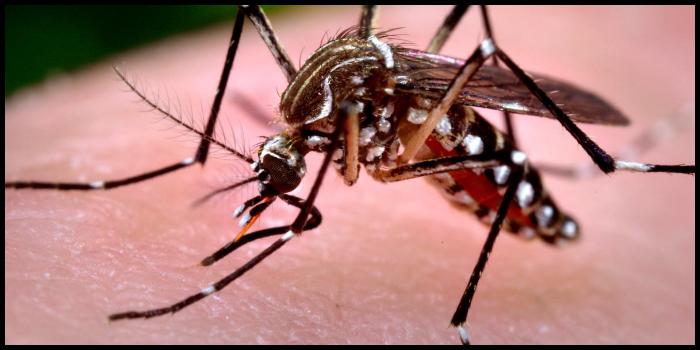 Virus killer West Nile: come si trasmette e come si sta diffondendo