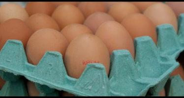 rischio salmonella, ritirate uova fresche