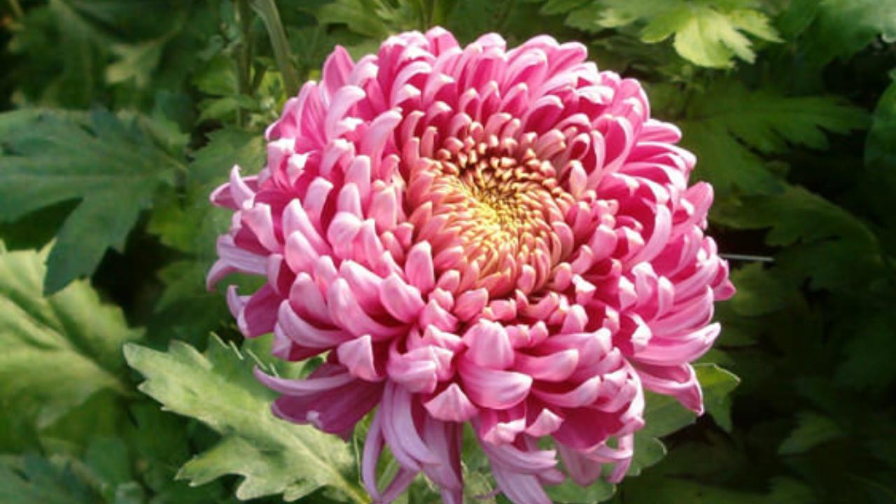 le piante per purificare l'aria di casa