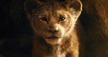 frasi il re leone film