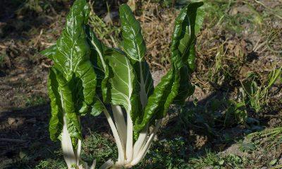 spesa febbraio frutta verdura stagione