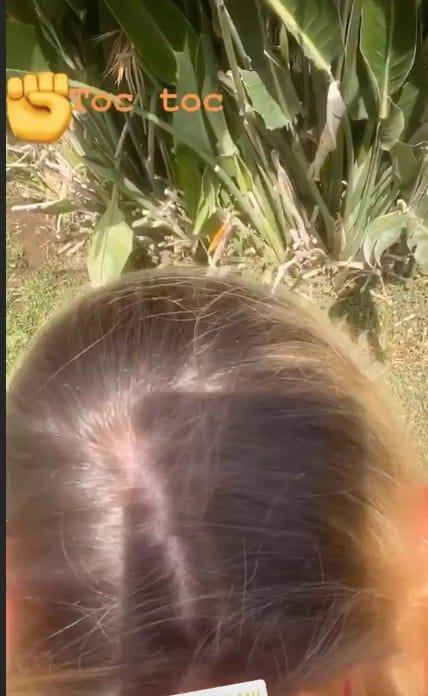 Ilary Blasi mostra la ricrescita, chiede aiuto e presenta la capra nana appena arrivata in casa (Foto)