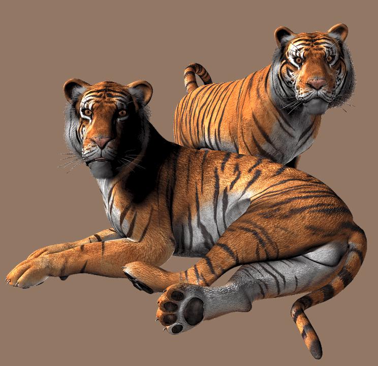 Google e i suoi animali 3D in realtà aumentata