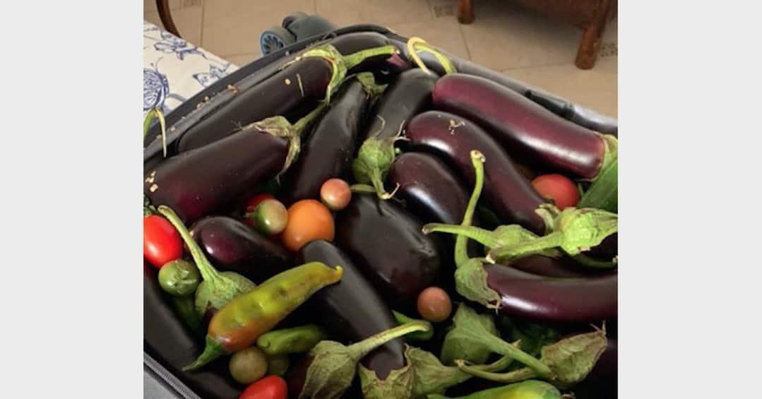 Anna Moroni con la valigia piena di verdure, suo marito è tornato da Roma (Foto)