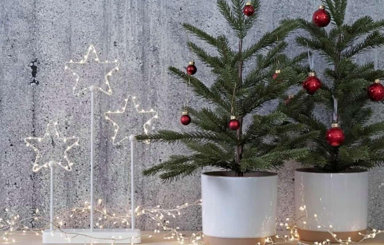 Vasi e piante natalizie: scegli da Ikea