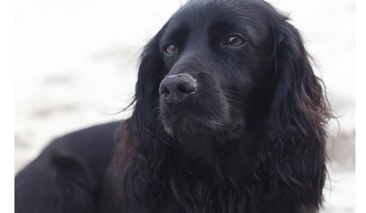 """L'addio di William e Kate Middleton al loro cane: """"E' stato nel cuore della nostra famiglia"""""""