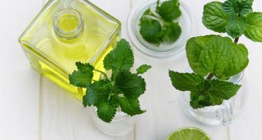 migliorare digestione piante erbe