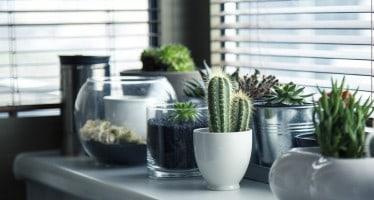 piante casa