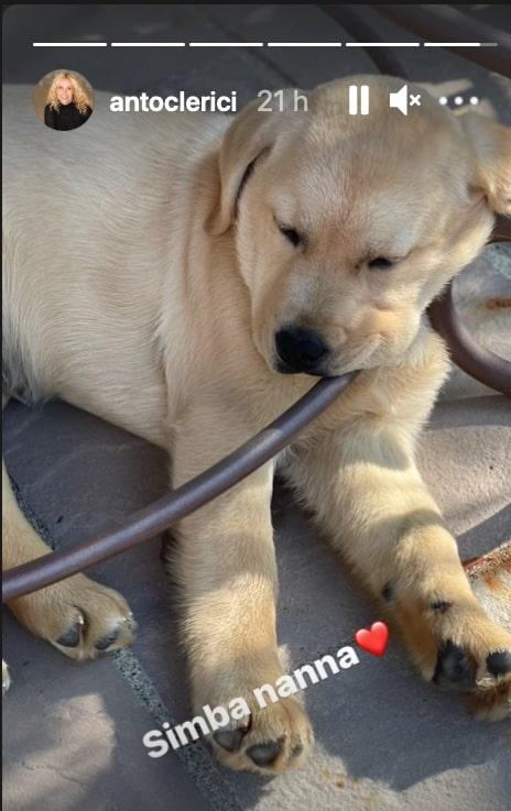 A casa di Antonella Clerici arriva il cane di Maelle, un labrador come Oliver (Foto)