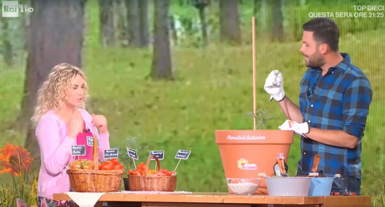 E' sempre mezzogiorno, Matt: come si piantano i pomodori nel vaso
