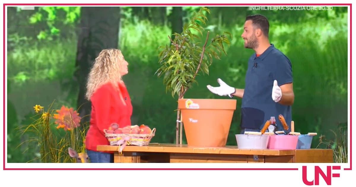 Matt, piante di pesche sul balcone di casa: E' sempre mezzogiorno