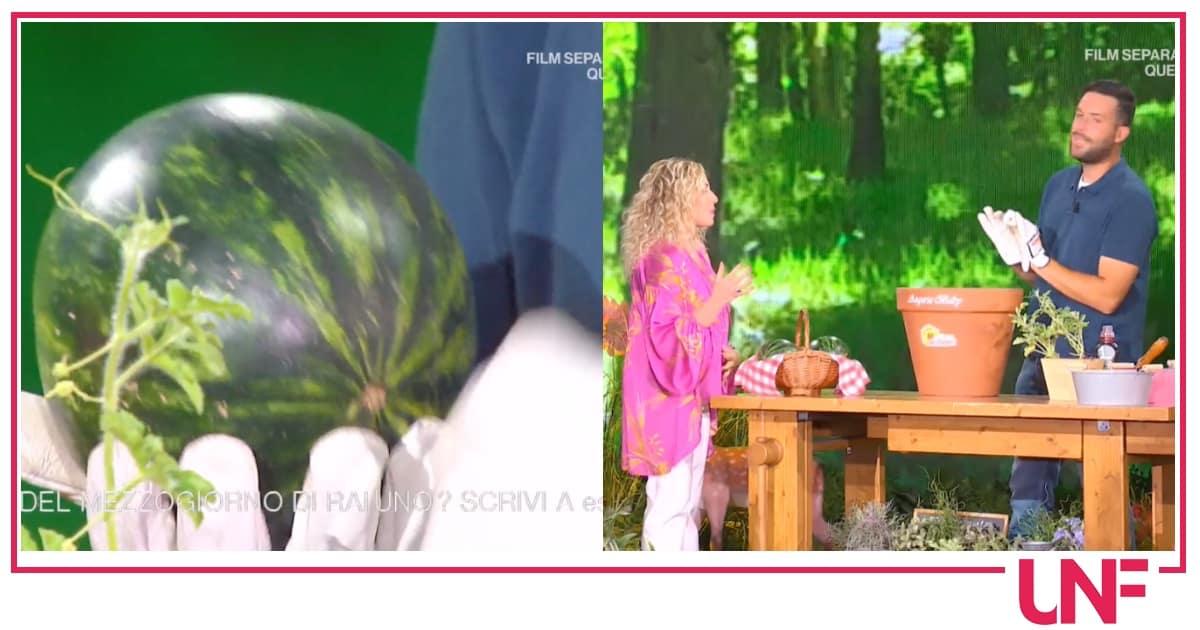 Matt: come si coltiva l'anguria baby sul balcone di casa