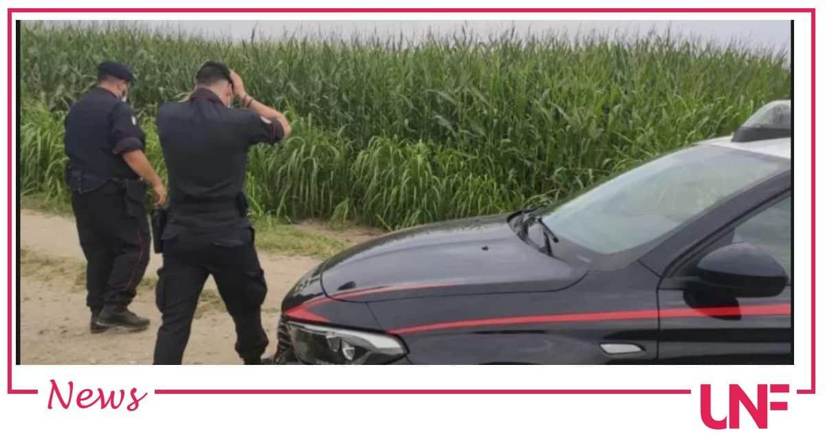 San Giuliano Milanese due donne morte in un campo di mais: investite da una mietitrebbia