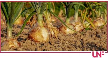 orto, cosa piantare tra settembre e ottobre