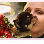 Un altro dolore per Charlene di Monaco, la morte del suo cane investito